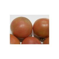 Tomate de Colgar son Gil Ecológico 0.2g