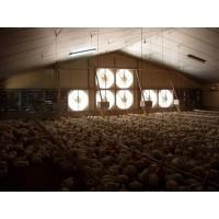 Llave en Mano Avícola, Construcción Explotaciones
