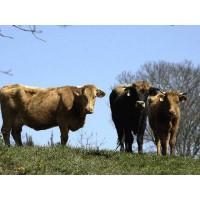 Ternera de Producción 100% Ecológica, Carne, Otros