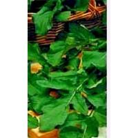 Rucula (Eruca Sativa). Envase Hermético de 6 Gr / 3000 Semillas