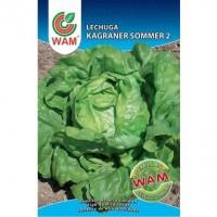 Semillas de Lechuga Kagraner Sommer 2 WAM 6 Gr