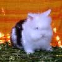 Conejos Cabeza de Leon