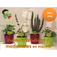 Curso de Cultivo de Plantas Aromaticas en Maceta