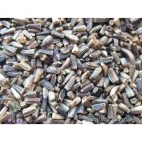 Semillas Achicoria Cichorium Intybus