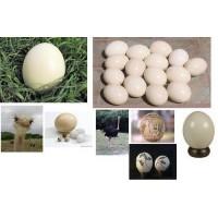 Huevo de Avestruz. 1 Unidad