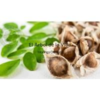 Plantas de Moringa Oleifera - Www.moringargentina.com
