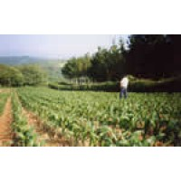 Semillas de Alfalfa, Avena, Cesped...