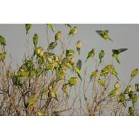 Ahuyentador Bird Gard Pro para Cotorras Argentinas (Cobertura 6.000 M2)