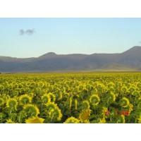 Crece la Inversión en Argentina - Fincas Agricolas y Ganaderas desde España