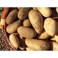 Patatas Nuevas Ecológicas -Extraídas bajo Pedido