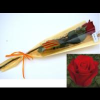 Rosa Freedom Preparada para Sant Jordi Cataluña