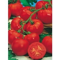 Semillas Tomate de Colgar 1Grs