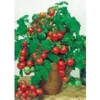 Semillas Tomate Cerise Red Cherry