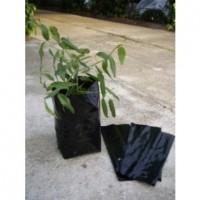 Bolsa para Plantar Olivos y Frutales. Medidas. 24 X 35 Cm . 200 Unidades