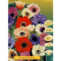 Anemona Coronaria de Caen Mix 10 Ud Bulbos