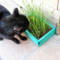 Kit de Hierba para Gato