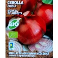 Cebolla Morada de Amposta. Cultivo Ecologico.
