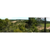 Finca, Agricola-Forestal
