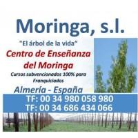 Franquicias de Cultivo de Moringa Ecologica