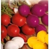 Rabanito-Rabano Mezcla de Colores. 900 Semillas