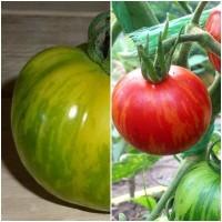 Semillas de Tomate Tigre Tigerella. 10 Gramos