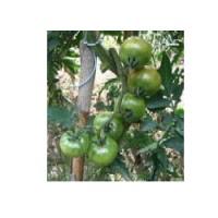 Semillas Tomate Pometa. 500 Semillas