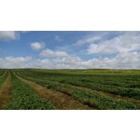 Vezas y Alfalfa
