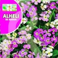 Alheli de Mahon, Variado. 10 GR.
