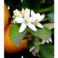 Azahar Flor Seca. 1 Kgr. Infusiones para Cocteleria. Herboristeria.