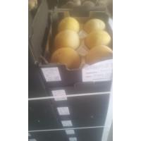 Melon Ecologico