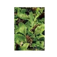Mezcla BABY Leaf-Ensalada de Primavera. Tiernas Hojas. 6 Gramos.