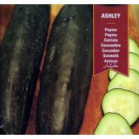 Pepino Ashley. 100 Gr / 3000 Semillas