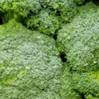 Planta de Broculi Verde en Bandeja de  10 Unidades
