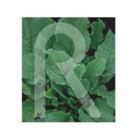 Semilla Horticolas-Sobre Borraja FLOR Blanca