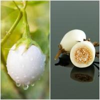 Semillas de Berenjena Huevos Blancos. 10 Gram