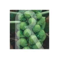 Semillas Horticolas-Sobre COL de Bruselas Medio Enana de la Halle