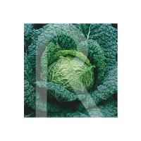 Semillas Horticolas-Sobre COL Milan Virtudes 3
