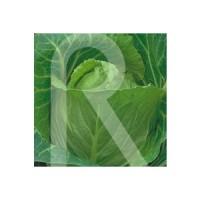 Semillas Horticolas-Sobre COL Repollo Coraz?n de BUEY (Grande)
