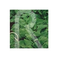Semillas Horticolas-Sobre Espinaca Monstruosa