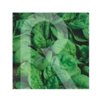 Semillas Horticolas-Sobre Espinaca Viking de