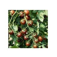 Semillas Tomate  Black Cherry  1.000 Semillas
