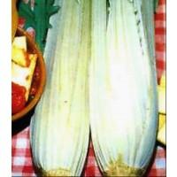 Cardo Lleno Blanco Sin Espinas. Resistente a las Heladas. 100 Gr / 2000 Semillas