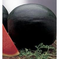 Sandia Sugar Baby - Perla Negra. 250 Semillas