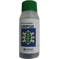 Thripor-L 2000 Orius Laevigatus