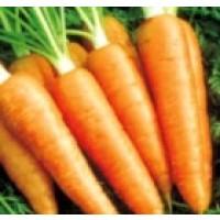 Zanahoria Gigante Flakkee. 8000 Semillas
