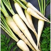 Zanahoria Blanca.  1000 Semillas