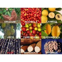 Inversión Verde. Frutos Tropicales Amazónicos Sostenible.