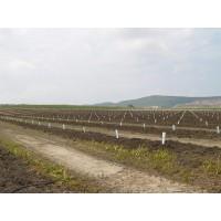 Plantaciones de Cítricos