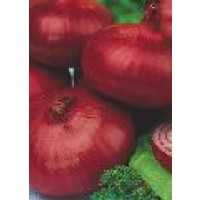 Semillas Cebolla Niort Colorada de Conservar