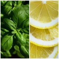 Semillas de Albahaca Aroma Limón. 10 Gramos